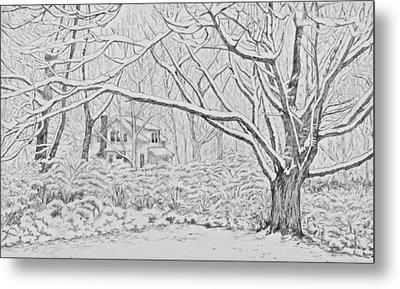 Snow On An Old Ash Tree Metal Print