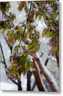 Metal Print featuring the photograph snow on the Cherry blossoms by Chris Flees