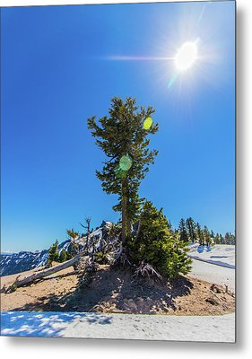 Metal Print featuring the photograph Snow Tree by Jonny D