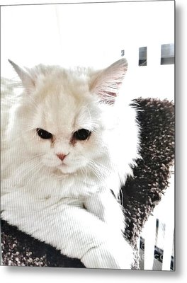 Metal Print featuring the photograph Snowball Is 92 Year Old Widows Cat by Marsha Heiken