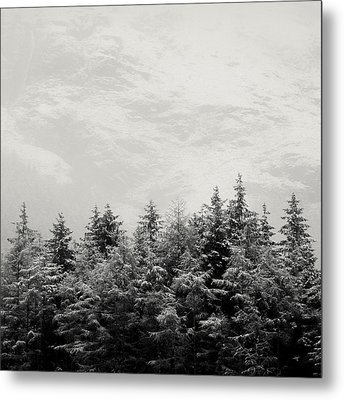 Snowcapped Firs Metal Print by Dave Bowman