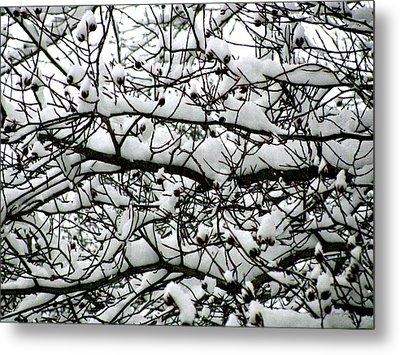 Snowfall On Branches Metal Print