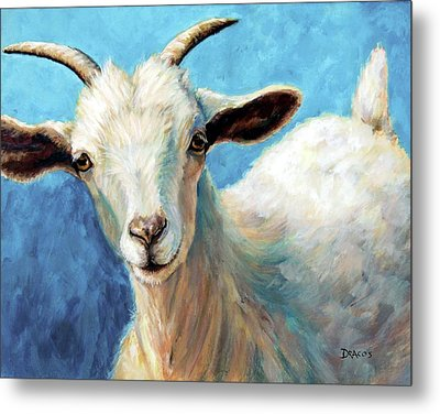 Snowflake, A Baby Cashmere Goat Metal Print by Dottie Dracos