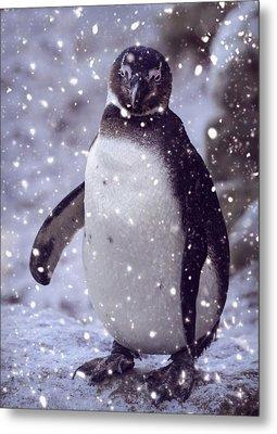 Metal Print featuring the photograph Snowpenguin by Chris Boulton