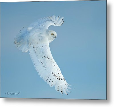 Snowy Against Blue Sky Metal Print by CR  Courson