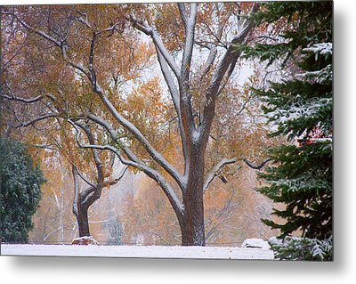 Snowy Autumn Landscape Metal Print by James BO  Insogna