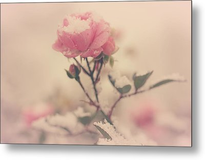Snowy Day Of Roses Metal Print
