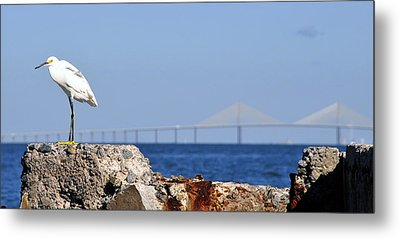 Snowy Egret And Sunshine Skyway Bridge Metal Print by David Lee Thompson