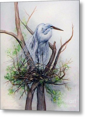 Snowy Egret On Nest Metal Print by Laurie Tietjen