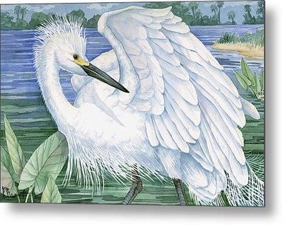 Snowy Egret Metal Print by Paul Brent