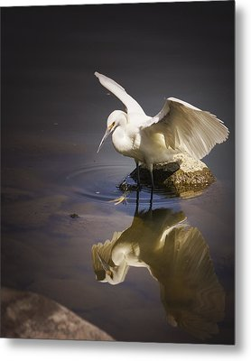 Snowy Egret Reflection Metal Print by Janis Knight