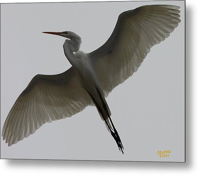 Snowy Egret Wings Of An Angel Metal Print