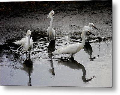 Snowy Egrets I Metal Print