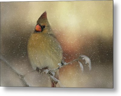 Snowy Female Cardinal Metal Print