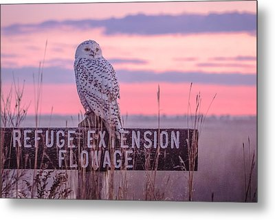 Snowy In The Meadow Metal Print