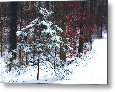 Snowy Little Fir Metal Print
