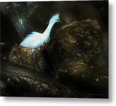 Snowy On The Rocks Metal Print