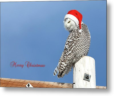 Metal Print featuring the photograph Snowy Owl Christmas Card by Everet Regal