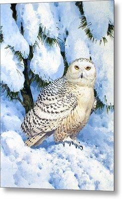 Snowy Owl Metal Print by John Francis