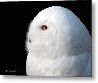 Snowy Owl Portrait Metal Print by CR  Courson