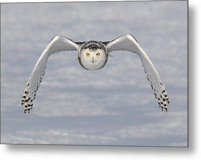 Snowy Owl Metal Print by Scott  Linstead