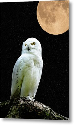 Snowy Owl Under The Moon Metal Print by Scott Carruthers