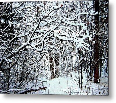Snowy Silence Metal Print by Shirley Sirois