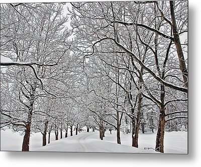 Metal Print featuring the photograph Snowy Treeline by Aimee L Maher Photography and Art Visit ALMGallerydotcom