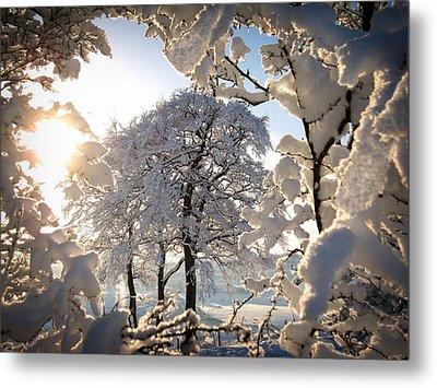 Snowy Trees Metal Print