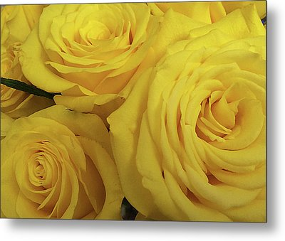 Snuggling Yellow Roses Metal Print by Sarah Vernon