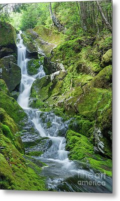 Snyder Brook - Low And Burbank's Grant New Hampshire  Metal Print by Erin Paul Donovan