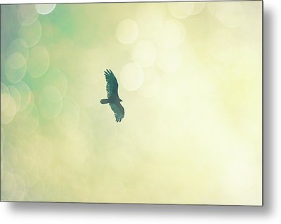 Metal Print featuring the photograph Soar by Melanie Alexandra Price
