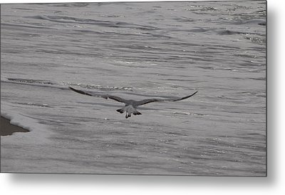 Metal Print featuring the photograph Soaring Gull by  Newwwman