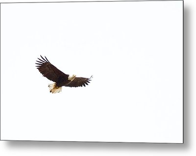 Metal Print featuring the photograph Soaring High 0881 by Michael Peychich