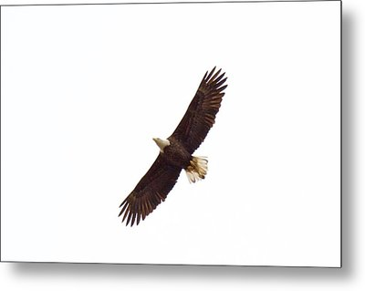 Metal Print featuring the photograph Soaring High 0885 by Michael Peychich