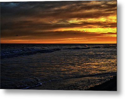 Soaring In The Sunset Metal Print by Kelly Reber