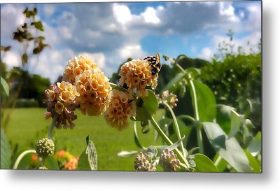 Metal Print featuring the photograph Sobaso by Isabella F Abbie Shores FRSA