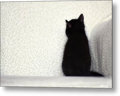 Sitting Kitty Metal Print by Amy Tyler