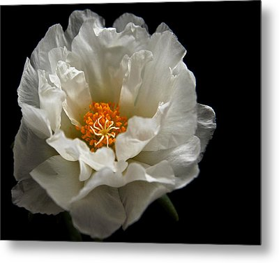 Metal Print featuring the photograph Soft And Pure by Judy Vincent