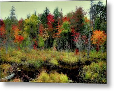Metal Print featuring the photograph Soft Autumn Color by David Patterson