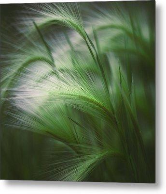 Soft Grass Metal Print by Scott Norris