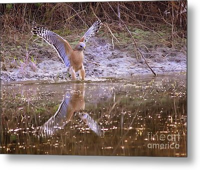 Soft Landing On The Pond Metal Print by Carol Groenen