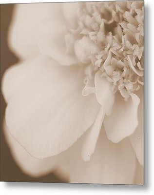 Soft Petals Metal Print by Christine Ricker Brandt