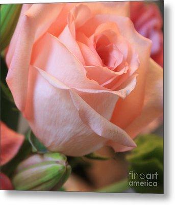 Soft Pink Rose Metal Print by Carol Groenen