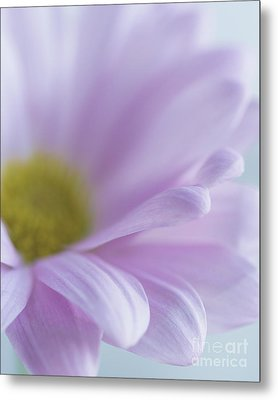 Soft Place To Fall Metal Print