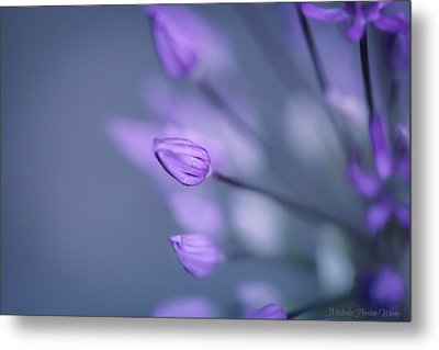 Soft Purple Metal Print