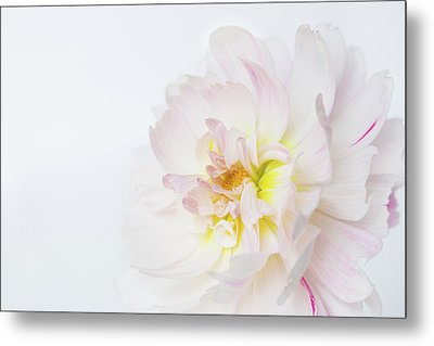 Metal Print featuring the photograph Soft Ruffles by Mary Jo Allen