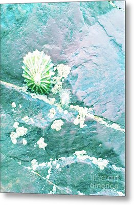 Metal Print featuring the photograph Soft Shell by Rebecca Harman