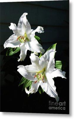 Soft White Lilies Metal Print