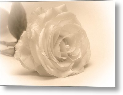 Metal Print featuring the photograph Soft White Rose by Scott Carruthers